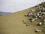 Rocks Strewn on Sand Dunes That Surround Qinghai Lake, China Photographic Print by David Evans