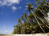 Palm Trees and Sky on Kosrae Island Photographic Print by Tim Laman
