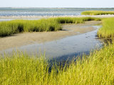Salt Marsh Habitat with Flock of Birds Taking Off, Cape Cod, Massachusetts Photographic Print by Tim Laman