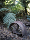 Rusting Tree Logging Carriage Wheel Abandoned in the Forest, Australia Photographic Print by Jason Edwards