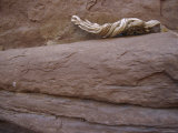Piece of Driftwood Sits on a Sandstone Ledge Photographic Print by Dawn Kish