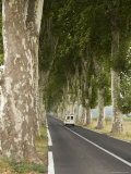 Narrow Country Road Lined with Plane Trees in Southern France Photographic Print by Bill Hatcher