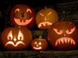 Row of Carved, Lit Pumpkins, Lexington, Massachusetts Photographic Print by Tim Laman