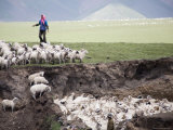 Nomadic Sheep Herder in Pink Head Scarf Tends Her Flock, Qinghai, China Photographic Print by David Evans