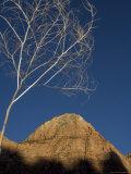Rock Formation, Zion National Park, Utah Photographic Print by John Burcham