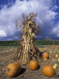 Pumpkins and Corn Stalks Bundle in Autumn, California Photographic Print by Rich Reid