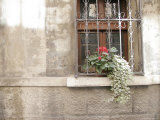 Potted Plants Outside Window Sill, Italy Photographic Print by Gina Martin