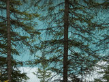 Pine Trees above a Lake Photographic Print by Bill Hatcher