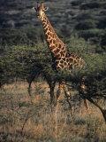 Portrait of a Giraffe, South Africa Photographic Print by Kenneth Garrett