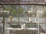 Potted Plants on Outdoor Shelves Outside a Flower Nursery, Parma, Italy Photographic Print by Gina Martin