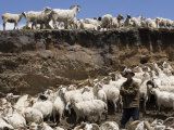 Nomad Sheep Herder Tends to his Flock, Qinghai, China Photographic Print by David Evans