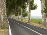 Narrow Country Road Lined with Plantain Trees in Southern France Photographic Print by Bill Hatcher