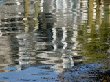 Reflections in the Ripples of a Pond, Groton, Connecticut Photographic Print by Todd Gipstein