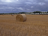 Sweden, Gotland: Round Bales of Wheat in a Swedish Field Photographic Print by  Brimberg & Coulson
