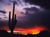 Storm Clouds Pass over a Saguaro Catus near Phoenix, Arizona Photographie par Bill Hatcher