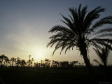 Sunset with Silhouetted Palm Trees at Lake Qarun in Egypt Photographic Print by Richard Nowitz