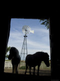 Ponies in Silhouette in a Barn in Greenleaf, Kasas, Kansas Photographie par Joel Sartore