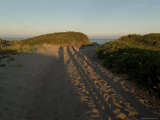 Long Shadows of Three People on a Sand Dune, Block Island, Rhode Island Photographic Print by Todd Gipstein