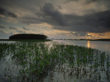Marsh Plants and Clouds in the Atchafalaya at Twilight Photographic Print by James P. Blair