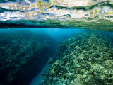 Underwater Coral Reef Views in Shallow Water, French Polynesia Photographic Print by Tim Laman