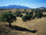 Trees Below the Santa Rita Mountains in Southern Arizona Photographic Print by Bill Hatcher