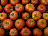 Native Tomatoes at an Outdoor Market in New York City Photographic Print by Todd Gipstein