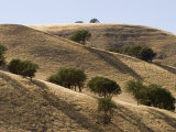 Valley Oak Trees Cast Shadows on a Dry Hillside, California Photographic Print by Rich Reid