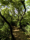 Tree Lined Nature Path Leading to the Water on a Summer Afternoon Photographic Print by Todd Gipstein