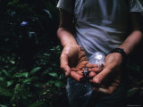 Scientist Displays a Captured Frog in the Panama Jungle Photographic Print by Bill Hatcher
