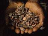 Pair of Hands Holds a Pile of Brown, Dried Cacao Beans Photographic Print by James L. Stanfield