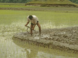 Nepali Farmer Prepares Paddy for Planting Rice During Early Monsoon Photographic Print by Gordon Wiltsie