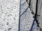 Metal Fence in the Snow, Chevy Chase, Maryland Photographic Print by Stacy Gold