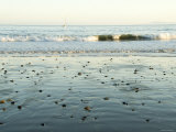 Pebbles in Wet Sand with Small Waves and Sail Boat in the Background, California Photographic Print by James Forte
