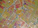 Very Large Vineyard Area to the East of Cape Town, South Africa Photographic Print by Michael Fay