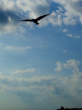 Seagull Soars over Long Island Sound and Plum Island Light Photographic Print by Todd Gipstein