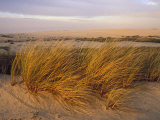 Sand Dunes at Oso Flaco Nature Conservancy, Pismo Beach, California Fotografisk tryk af Rich Reid
