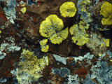 Splashes of Lichens Adorn a Rock Photographic Print by Michael S. Quinton