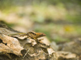 Unknown Lizard Sitting Ontree Stump in Caracol Park, Belize Photographic Print by James Forte