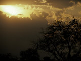 The Silhouette of a Tawny Eagle Roosting in a Tree Top at Sunset Photographic Print by Jason Edwards