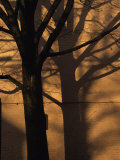 Tree Casts a Duplicate Shadow on a Brick Wall Photographic Print by Stacy Gold