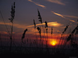 Sea Oats Blow in the Breeze as the Sun Sets over the Gulf of Mexico, Holmes Beach, Florida Photographic Print by Stacy Gold