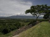 Tree and Mayan Ruins of Tonina, Mexico Photographic Print by Gina Martin