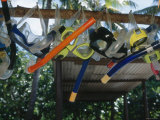 Snorkeling Equipment Hanging from Tree Branch Fotografie-Druck von James Forte