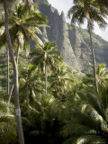 Scenic View of Coconut Palm Trees and Mountains, Anaho Bay, French Polynesia Photographic Print by Tim Laman