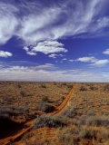 Sports Utility Vehicle Parallel Wheel Tracks over Vast Red Sand Dunes, Australia Photographic Print by Jason Edwards