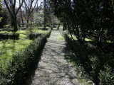 Shadowed Path and Trees in a Garden, Parma, Italy Photographic Print by Gina Martin