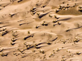These Wind Swept Dunes Are Located near the Indian Ocean Coast, Kenya Photographic Print by Michael Fay
