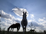 The Sun Shines Through Clouds on Some Horses in Burwell, Nebraska Photographic Print by Joel Sartore