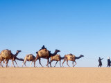 Tuareg Journey Across the Desert to Bilma to Buy Salt for Trade Photographic Print by Michael S. Lewis