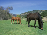 Two Horses in the Meadow at Arroyo Hondo Preserve, California Photographic Print by Rich Reid